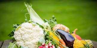 vegetable business plan in hindi